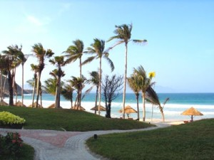 Tra Co beach in Quang Ninh province