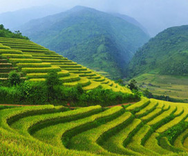 Sapa tours - Sapa terraced fields - Vietnamtravelblog