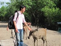 Tourists pat a deer at Vam Sat Ecotourism Area in HCMC's Can Gio District - Vietnamtravelblog