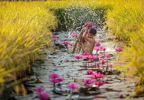 Water lily flowers in Mekong Delta - Mekong delta tours