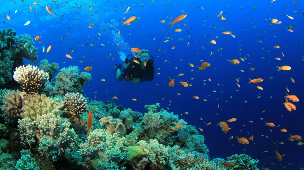 diving-sites-in-vietnam-nha-trang