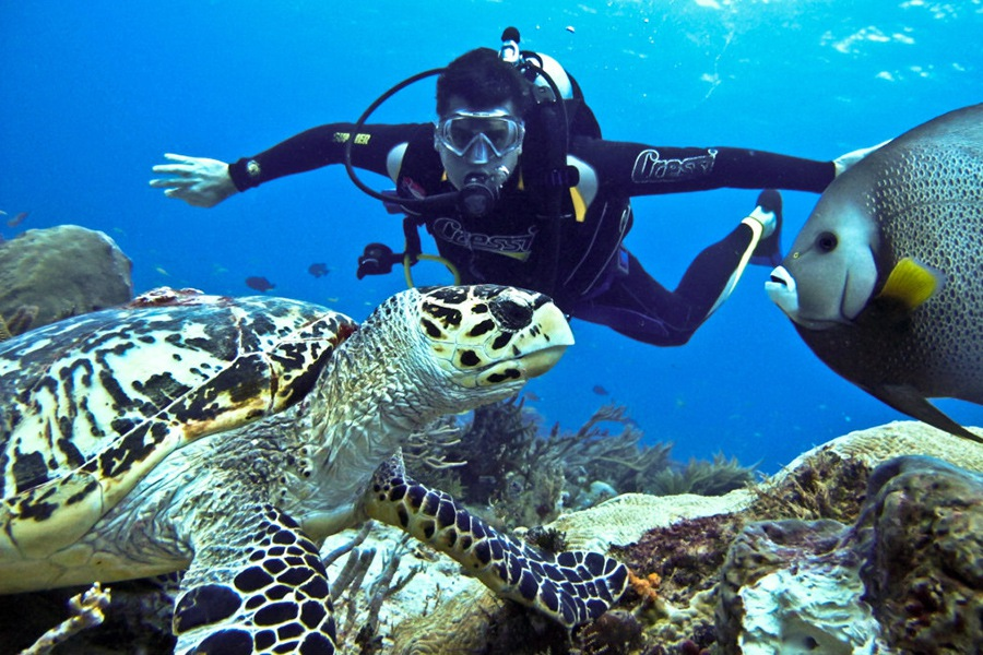 diving-sites-in-vietnam-phu-quoc
